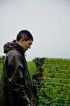 vigneron-pluie-2008