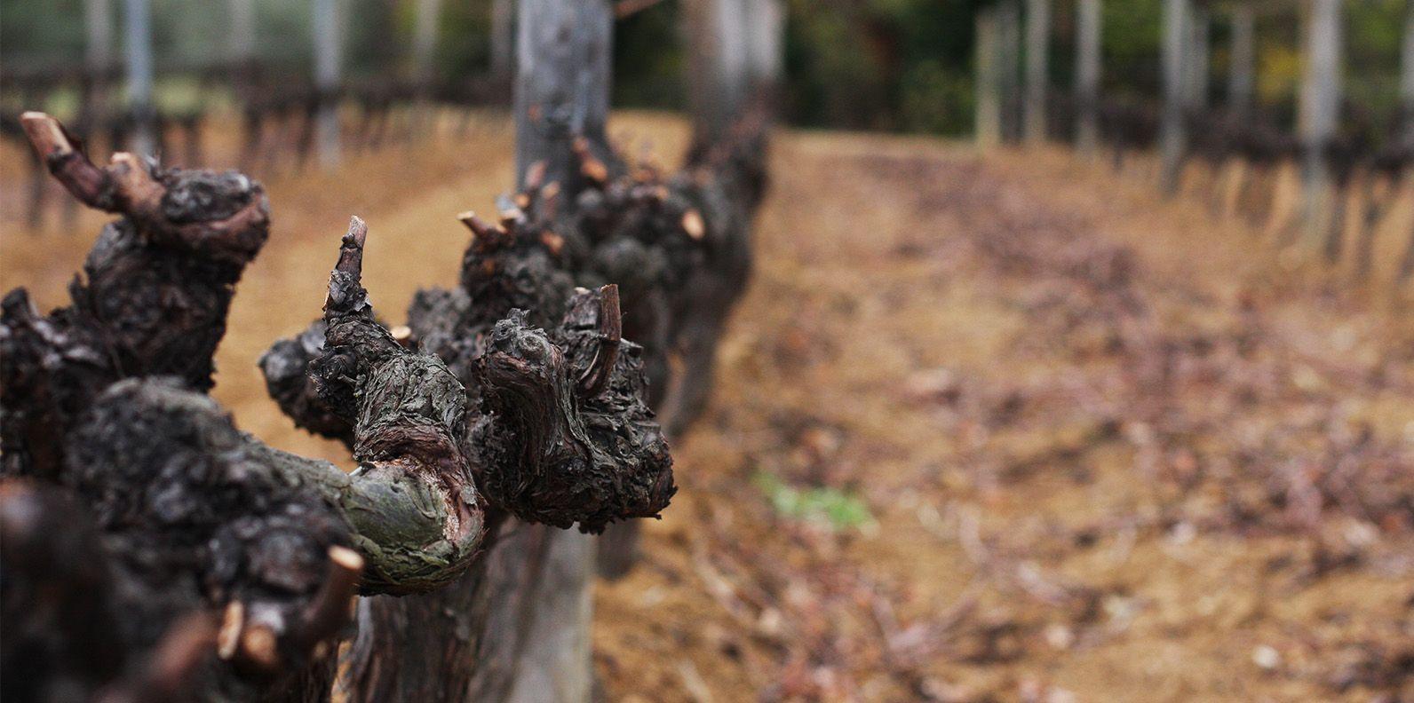 Bassac Vieilles Vignes