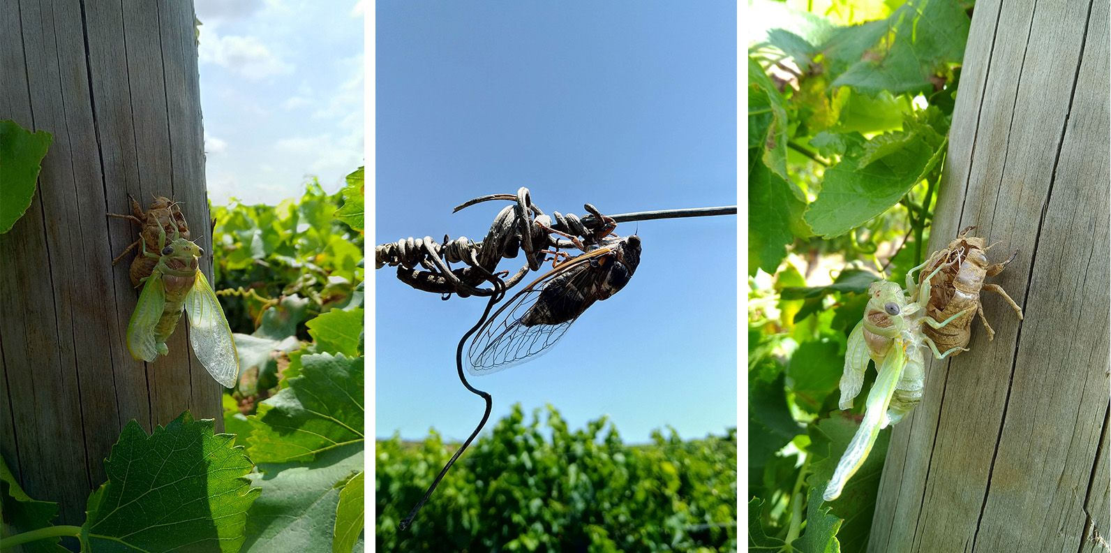 bassac insects having fun
