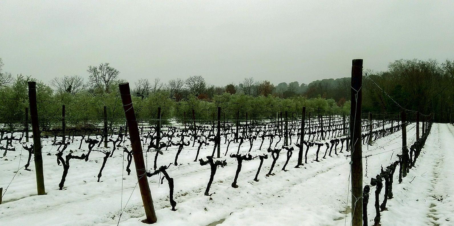 bassac snowy vineyard